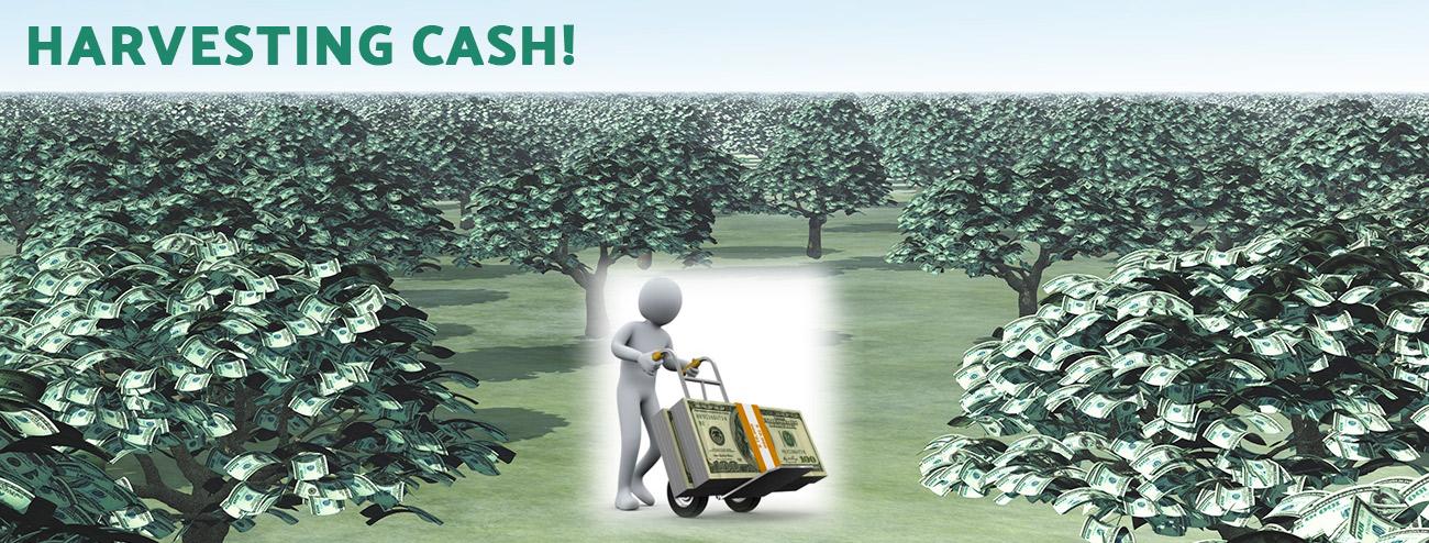 Harvesting Cash!